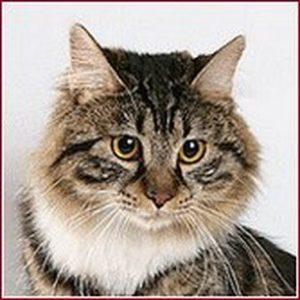 EST * Spiridon Karmino Cat