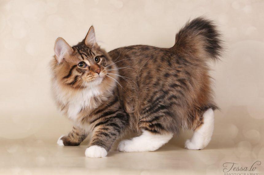 Katėms nuodingi maisto produktai