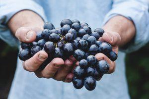 katems nuodingi maisto produktai - vynuoges kurilu bobteilai
