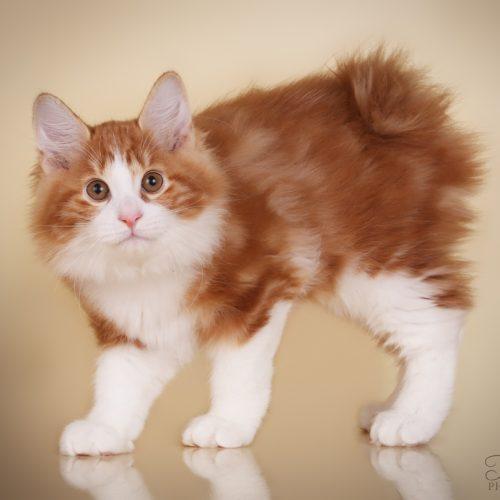 Mankšta katėms, gyvenančioms namuose